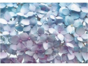 komar-fototapetai-8-961-light-blue-1